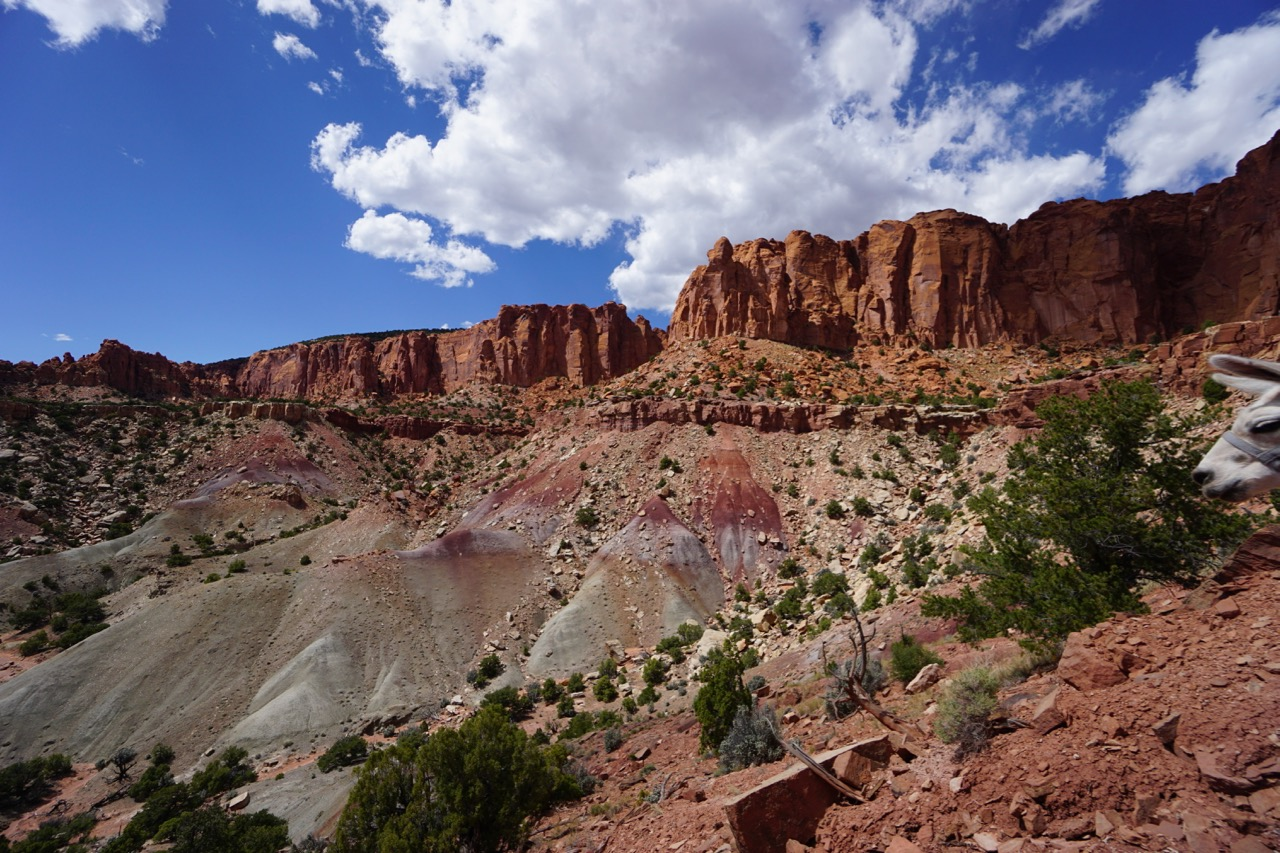 utah-red-cliffs